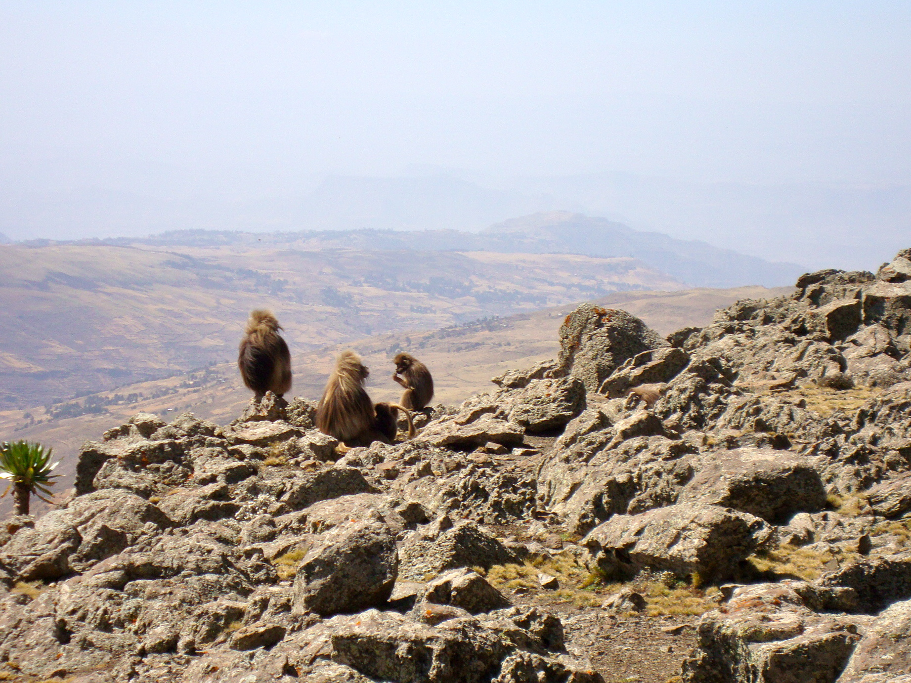 Buhawit Pass, Simien Mountains