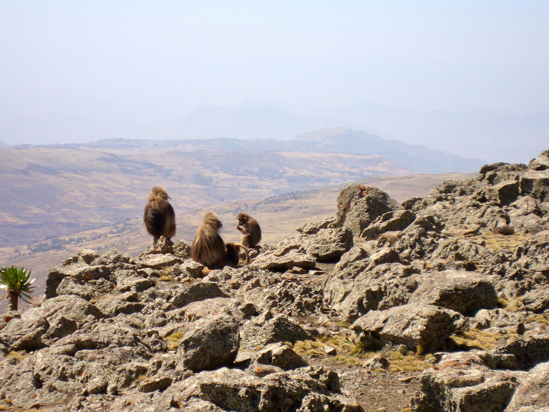 Buhawit Pass, Simien Mountains